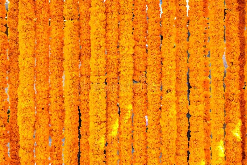 Marigold yellow flowers stock image