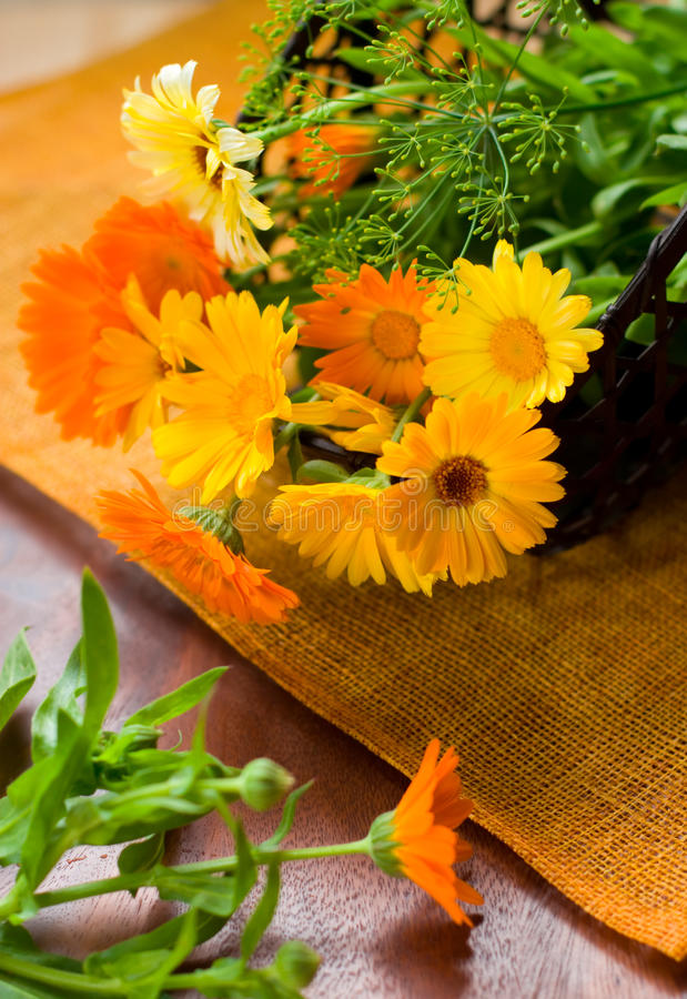 Marigolds fotos de stock royalty free