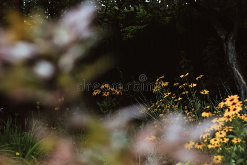 Marigolds stock image
