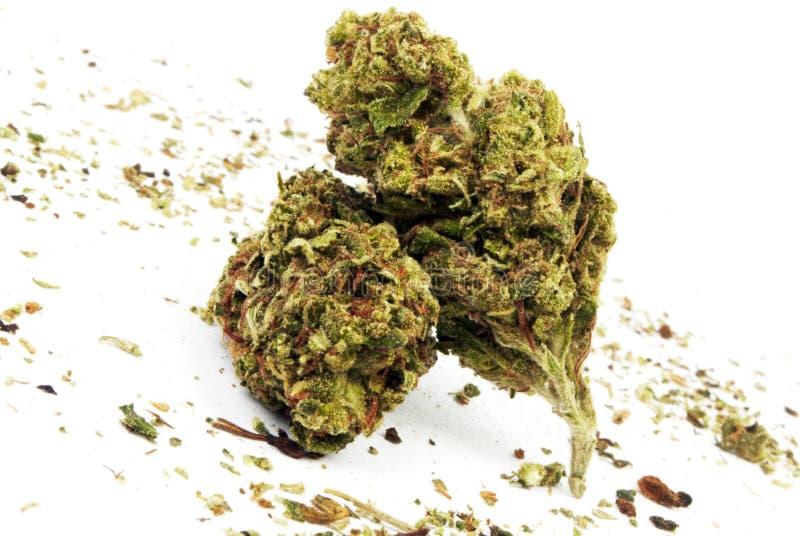 Marihuana stock afbeeldingen