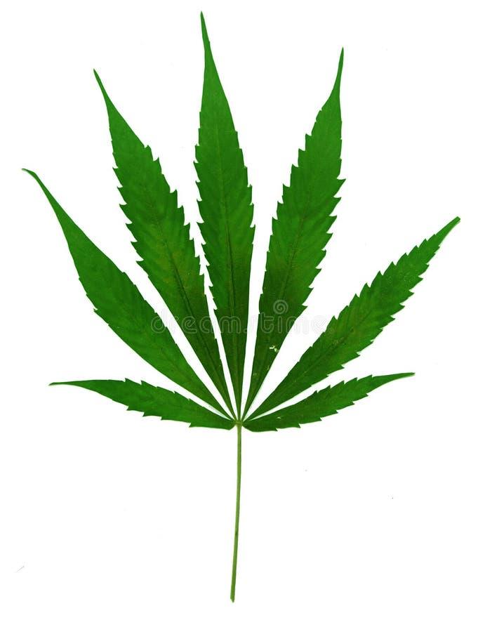 Marihuana lizenzfreie stockfotos