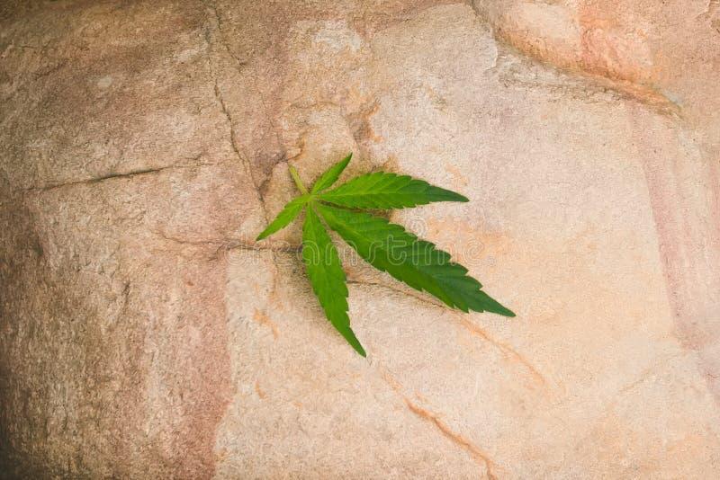 marihuana konopie opuszcza w ciężkich cieniach na kamieniu obraz stock