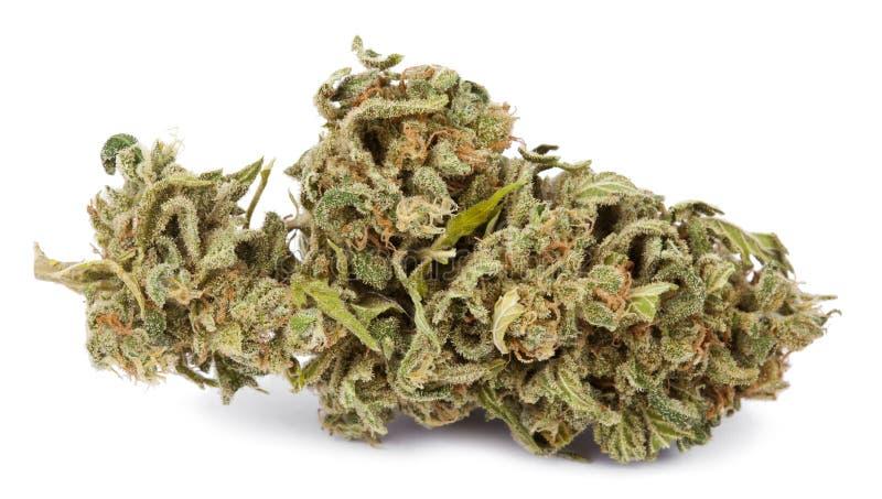 Marihuana pączek obrazy royalty free