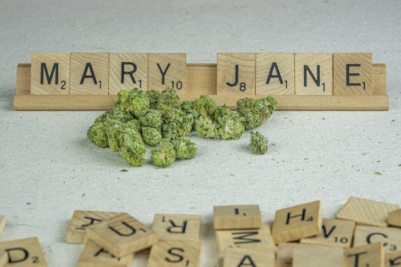 Marihuana pączkuje w listach obrazy royalty free