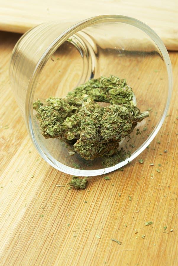 Marihuana Recreatieve en Medische Pot in Amerika stock foto's