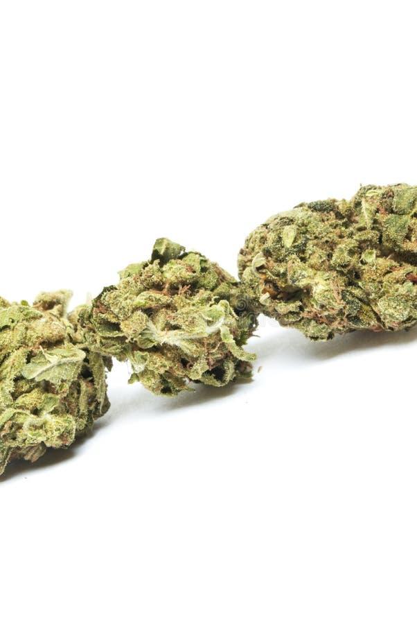 Marihuana, torba świrzepa fotografia stock