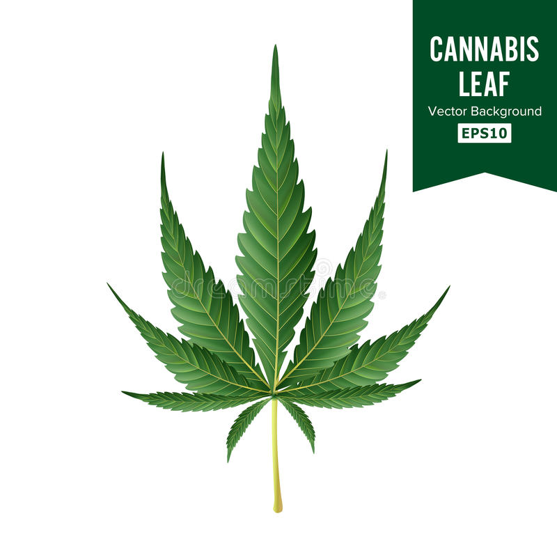 Marihuana wektor Medyczna Zielonej rośliny ilustracja Odizolowywająca Na Białym tle Marihuana Graficznego projekta element Dla ilustracji