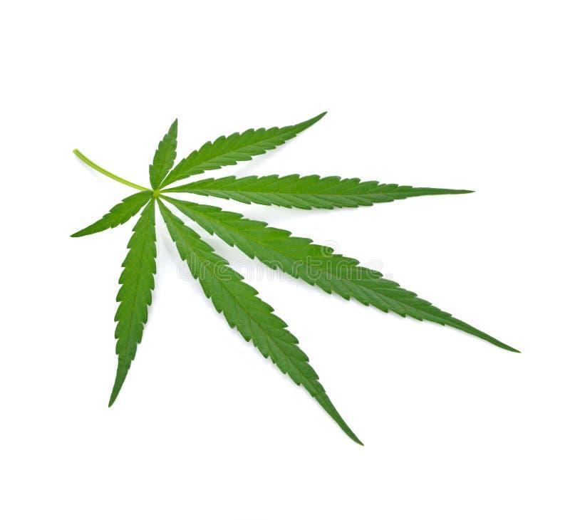 marihuanablad op witte achtergrond royalty-vrije stock afbeelding