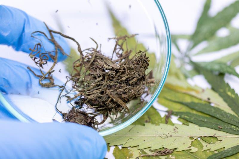 Marihuanabladeren, Poeder van Cannabisdrugs op een Witte achtergrond stock afbeeldingen