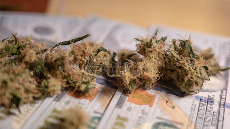 Marihuanaknospen liegen auf Geld lizenzfreie stockfotos