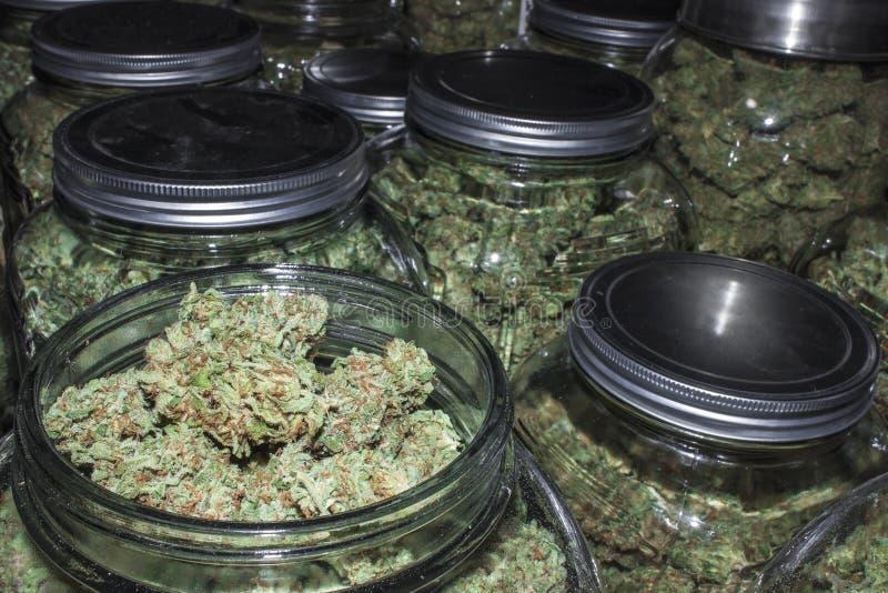 Marihuanakruiken in Rijen met Deksel van het Tonen van Knoppen stock afbeeldingen