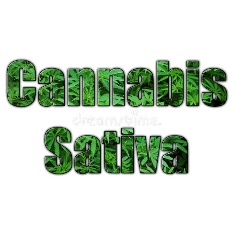 Marihuany Sativa 3D literowanie Z Jasnym tłem Wysokiej Jakości royalty ilustracja