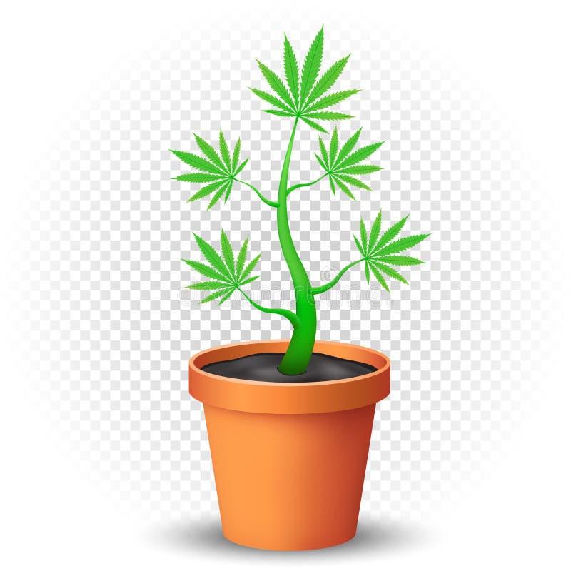 Marihuany zasadzają r w flowerpot royalty ilustracja
