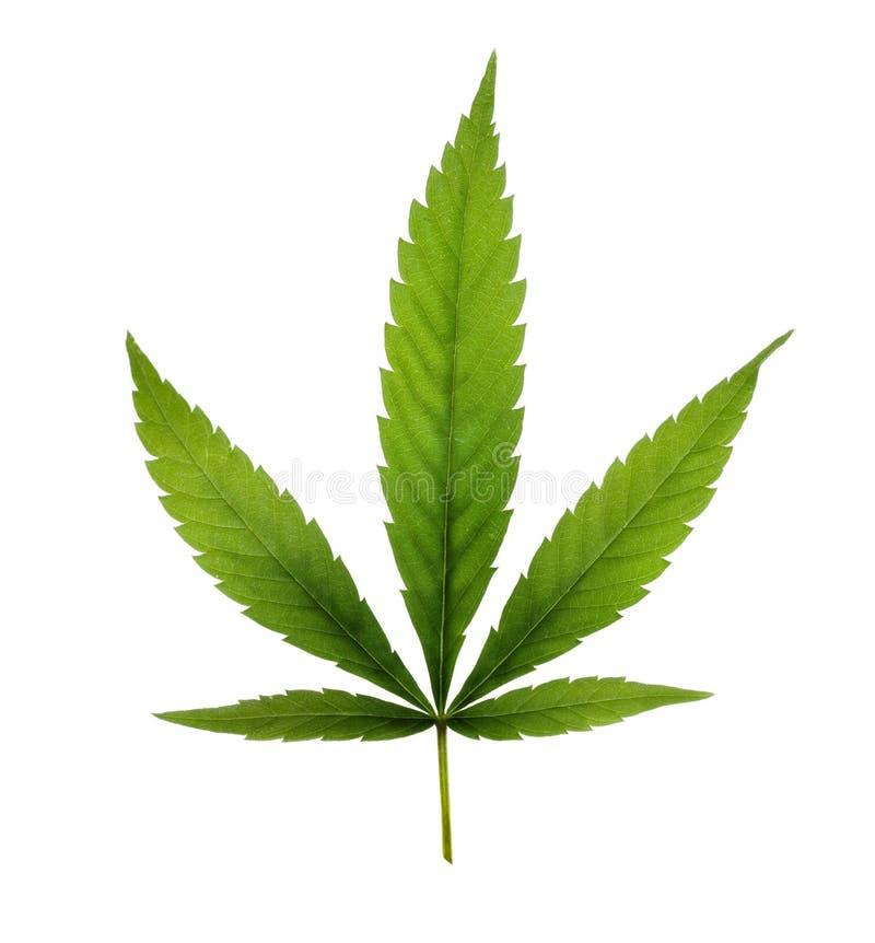 Marijuana images libres de droits