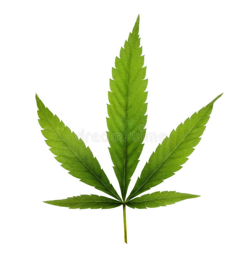 Download Marijuana stock image. Image of green, dope, habit, background - 11983879
