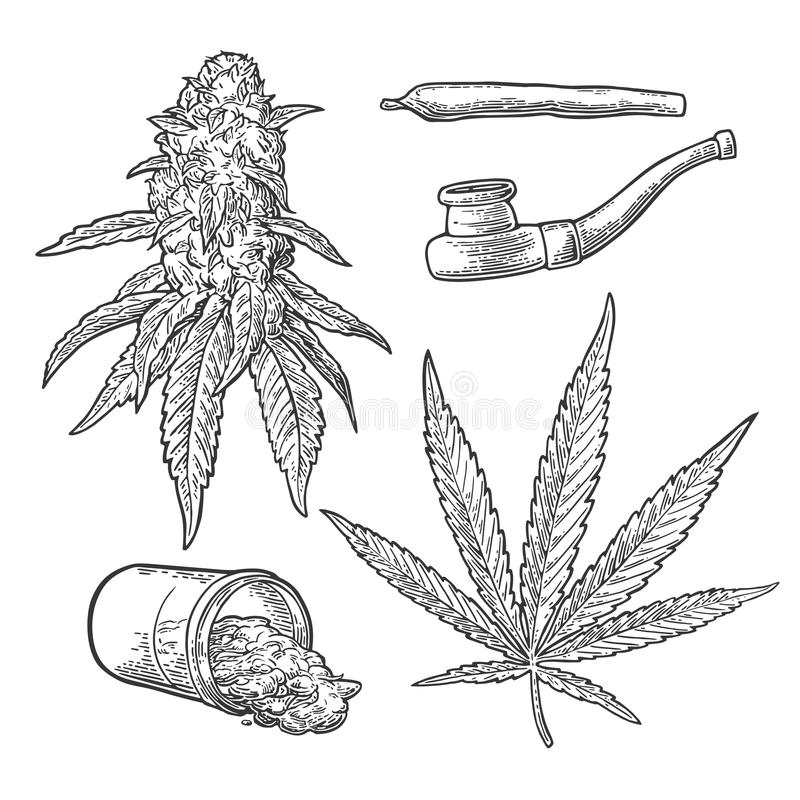 Marijuana buds, leaves, bottle , cigarettes and pipe for smoking. vector illustration