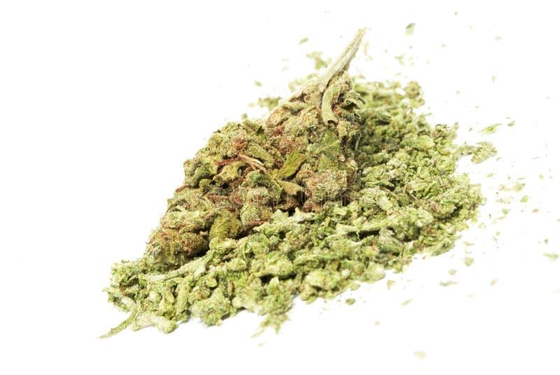 Marijuana. And Cannabis on White Background royalty free stock photo