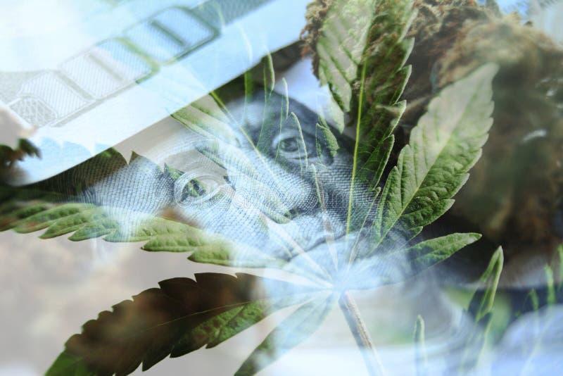 Marijuana gagnar med det högkvalitativa hundratals-, knopp- & marijuanabladet arkivbild