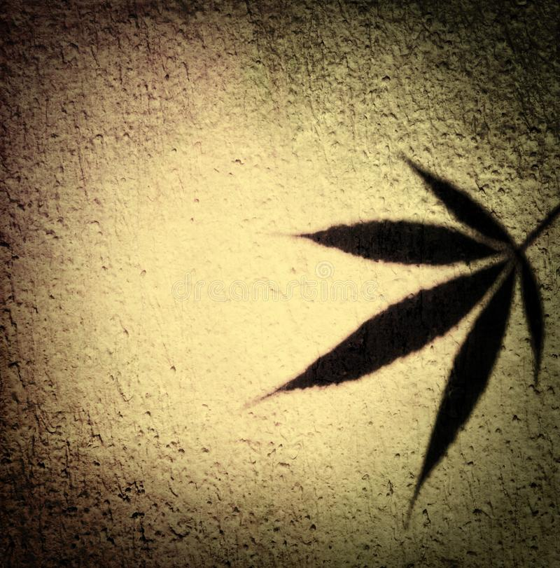 Marijuana leaf shadow in vintage beige tone design – label template background. Image stock images