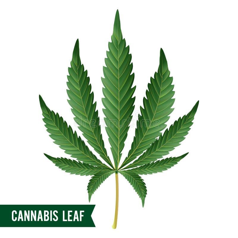 Marijuana Leaf Vector. Green Hemp Cannabis Sativa or Cannabis Indica Marijuana Leaf Isolated On White Background. Medical Plant stock illustration