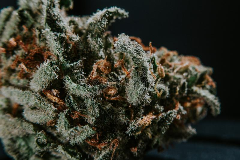 Marijuana médicale, cannabis, sativa, indica, Trichomes, THC, CBD, traitement de cancer, mauvaise herbe, fleur, chanvre, gramme,  images stock