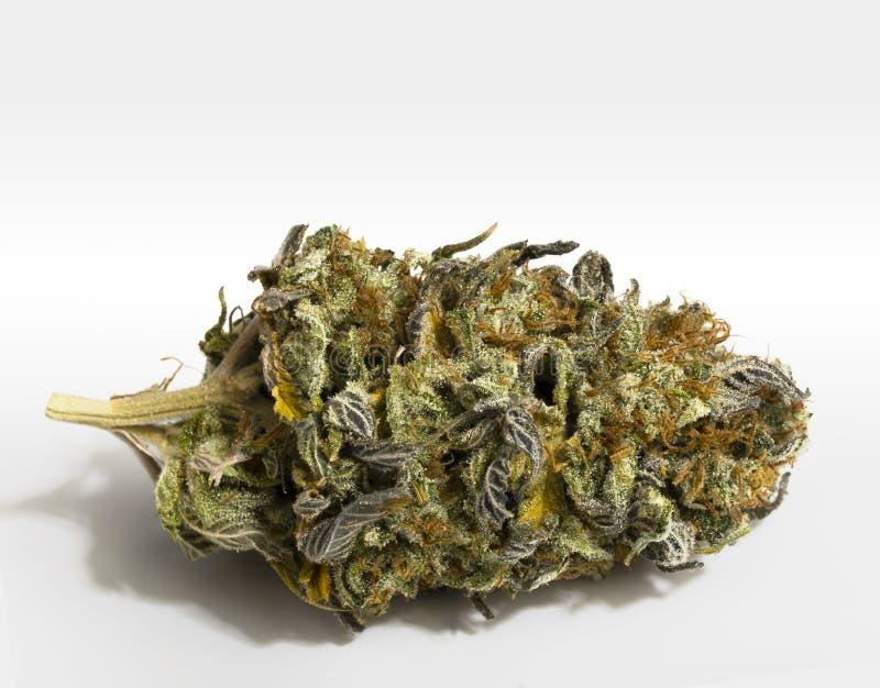 Marijuana no branco foto de stock