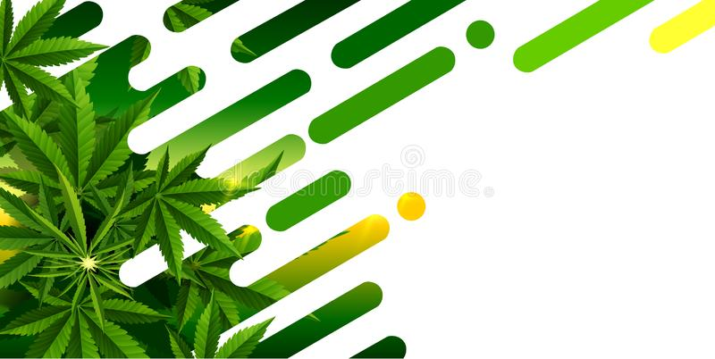 Marijuana plant and cannabis on white backgrounds. Marijuana concept and cannabis oil and legislation social issue as medical and recreational weed usage on stock illustration