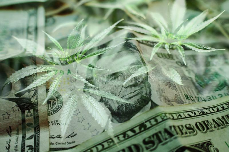 Marijuana`s Industry Profits Concept With Cannabis Sativa Leaves On American Money High Quality stock photography