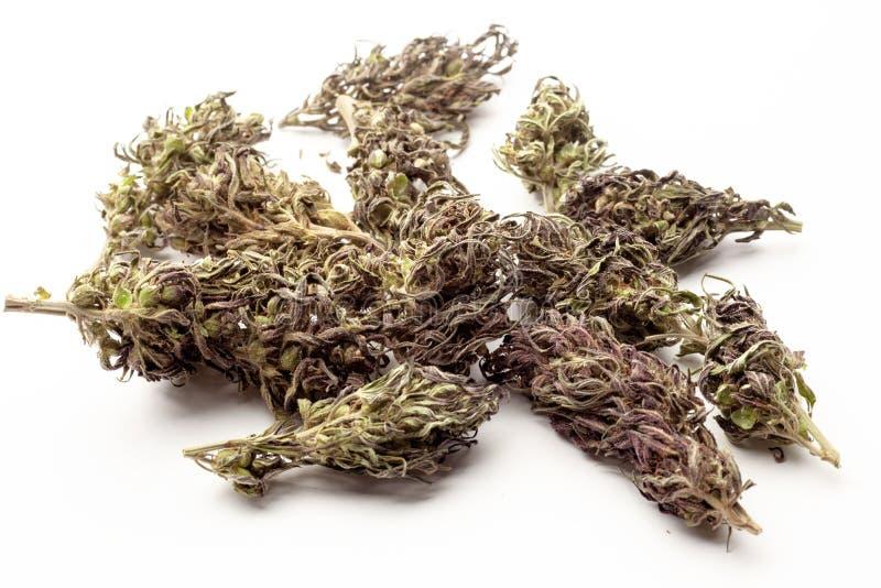Marijuanaknoppar som isoleras på en vit bakgrund THC och CBD-värde och påverkan för hälsa arkivfoto
