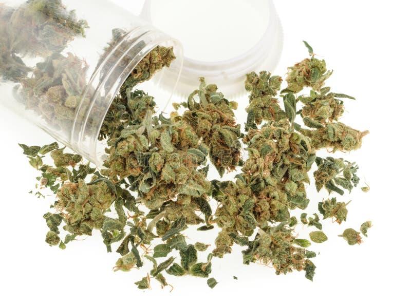 Marijuanaknoppar som isoleras på vit bakgrund royaltyfri fotografi
