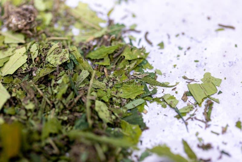 Marijuanasidor, pulver av cannabisdroger p? en vit bakgrund arkivbilder
