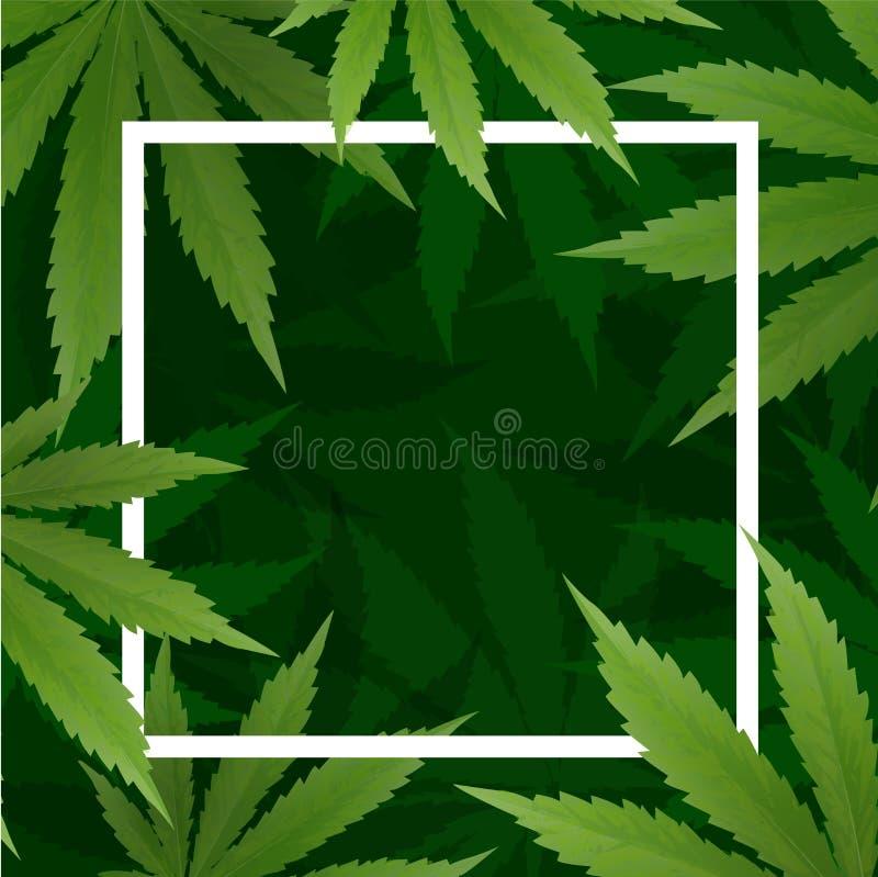 Marijuanaväxt och cannabis på gröna bakgrunder vektor illustrationer