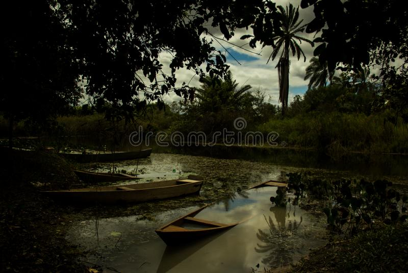 Marimbus våtmark, i Chapada Diamantina arkivbilder
