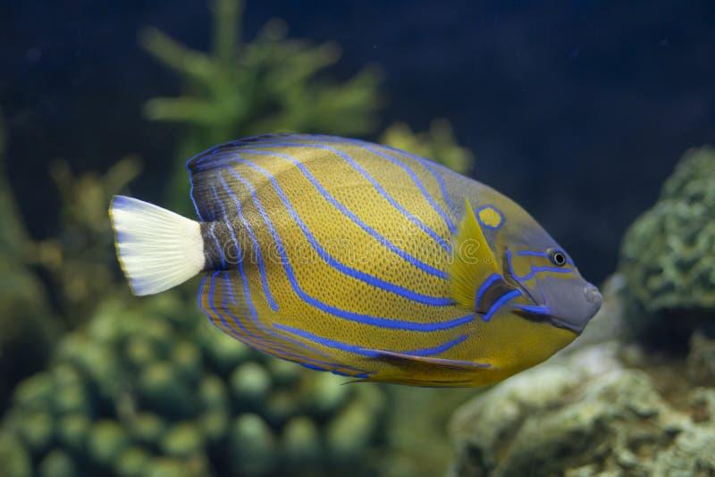 Marin- fisk arkivfoton