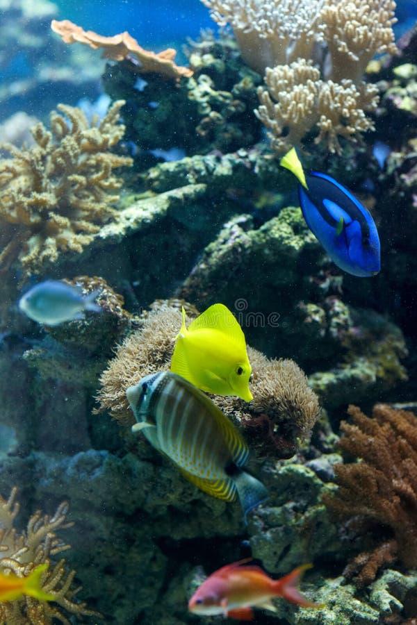 marina de durée photographie stock libre de droits