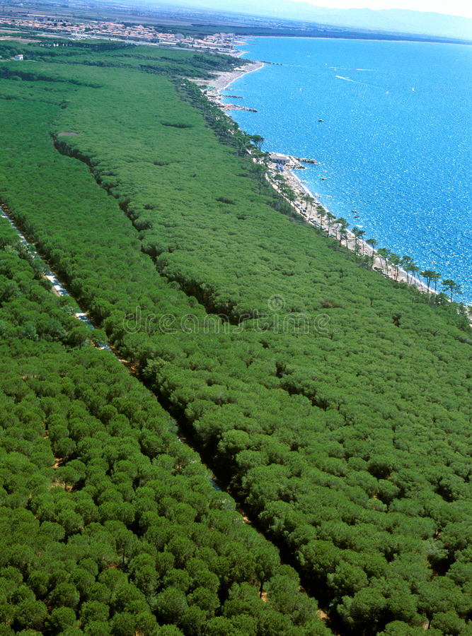Marina di Cecina - aerial view of pinewood beaches and sea. Marina di Cecina, Livorno, Tuscany - aerial view of pinewood beaches and sea in summer time royalty free stock image