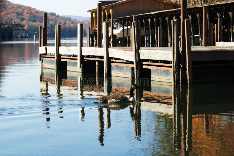 Marina on lake in the autumn royalty free stock image