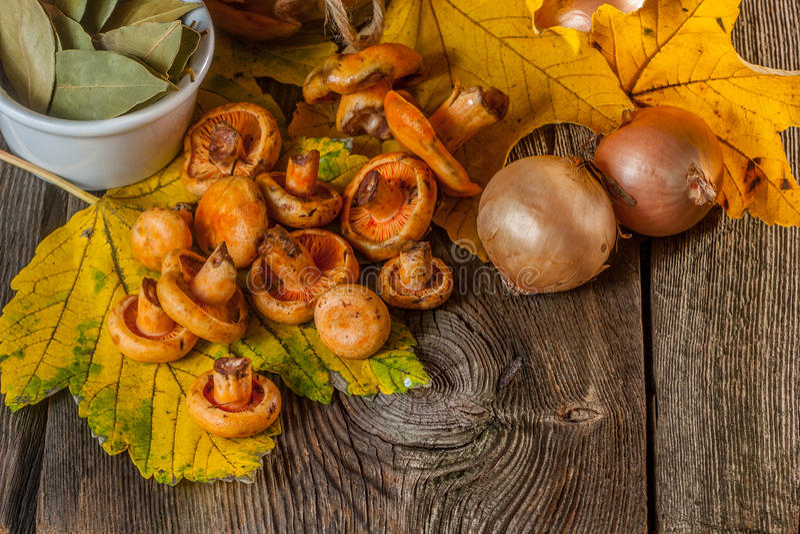marinated грибы стоковое изображение rf