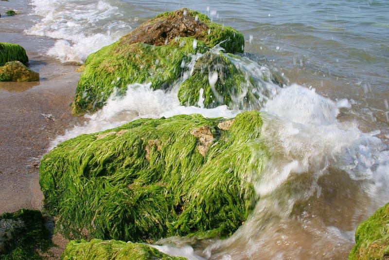 Marine algae stock photos