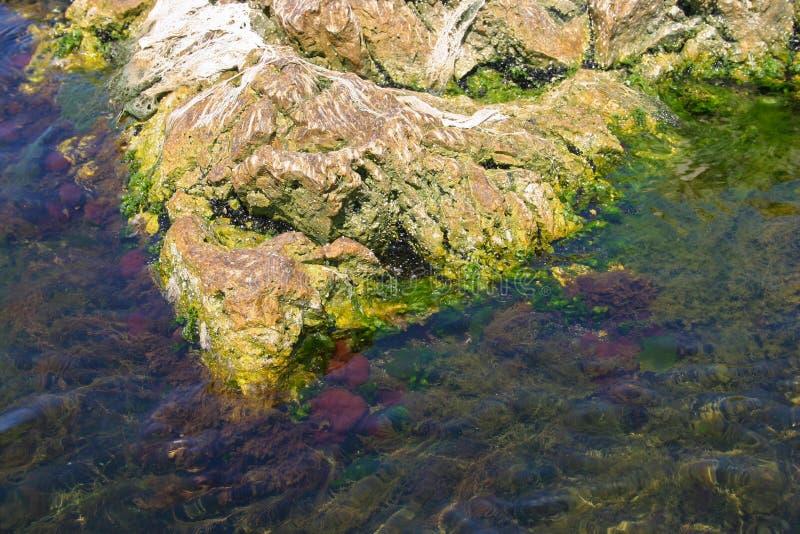 Marine algae stock photography