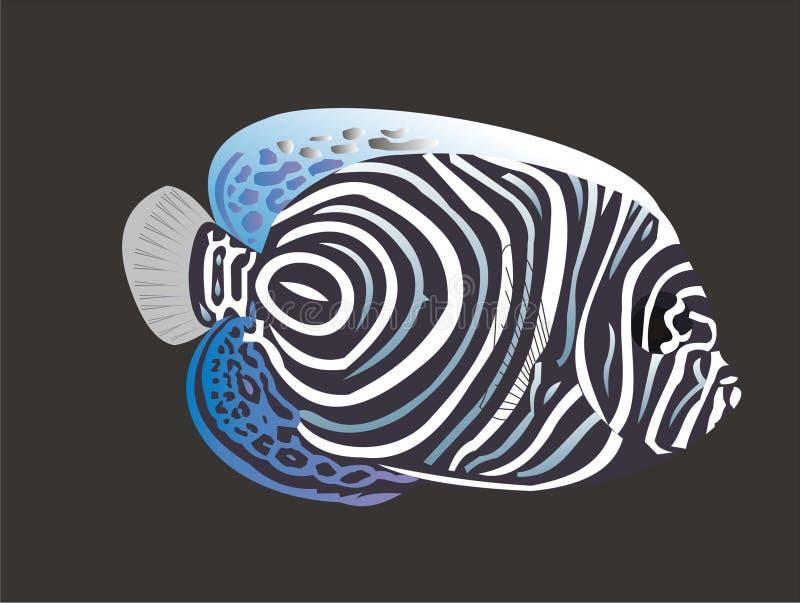 marine angelfish royalty free stock photography