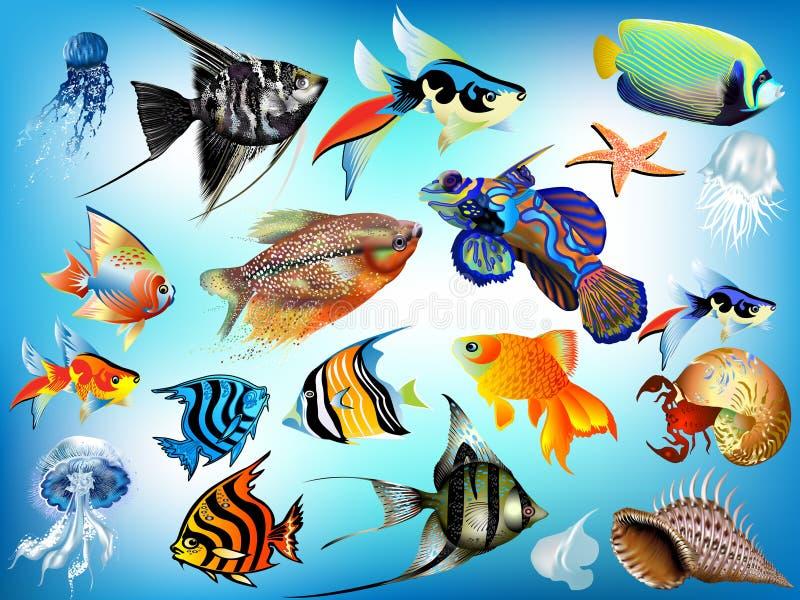Marine animals. A set of marine animals, fish, jellyfish, shells, starfish, in different variants royalty free illustration