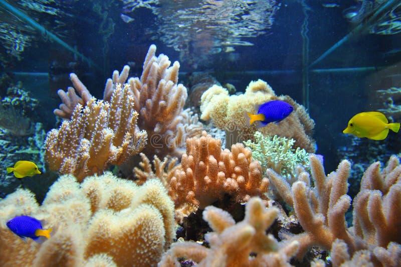 Download Marine aquarium stock image. Image of tail, yellow, coral - 19400577