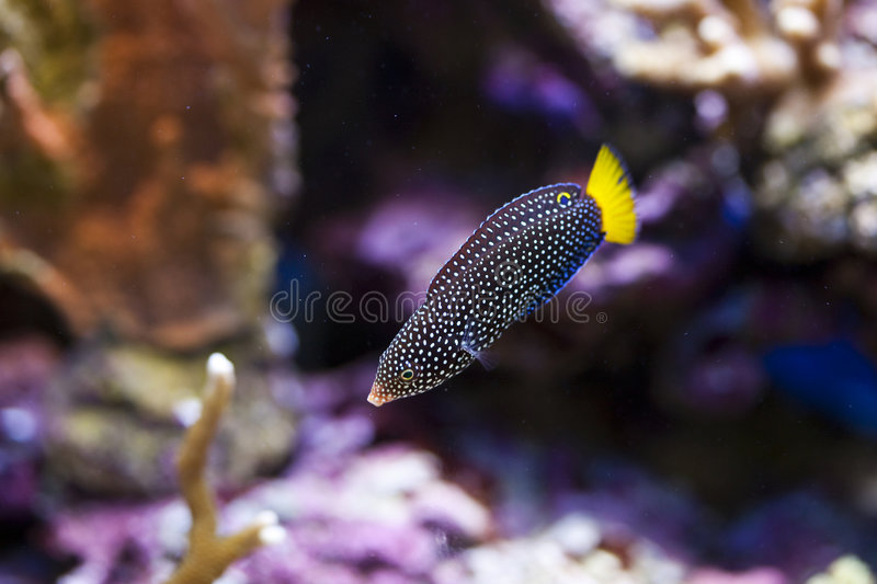 Marine aquarium fish tank. Tropical animal in a salt water fish tank aquarium under water. Flash light can kill the animals so the photo was taken with available royalty free stock photos