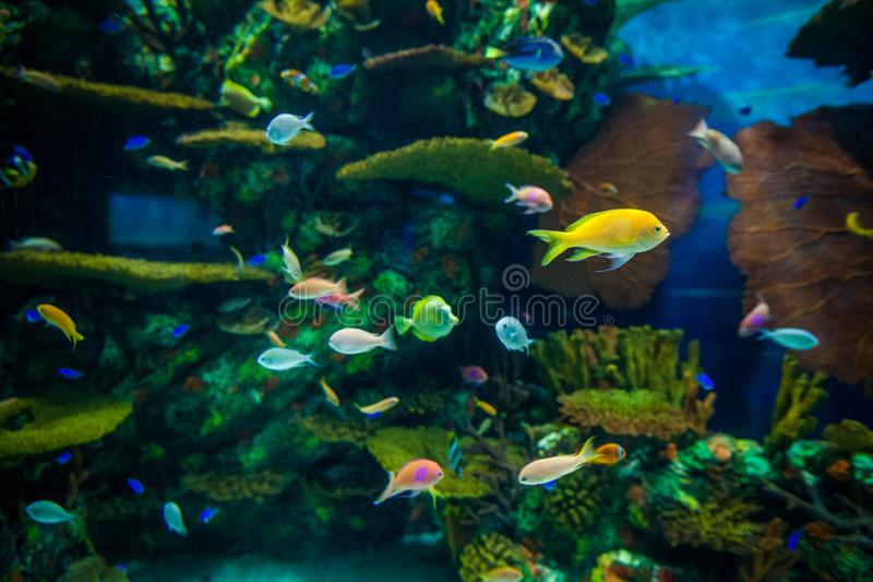 A marine aquarium with fishes and seaweed royalty free stock photos