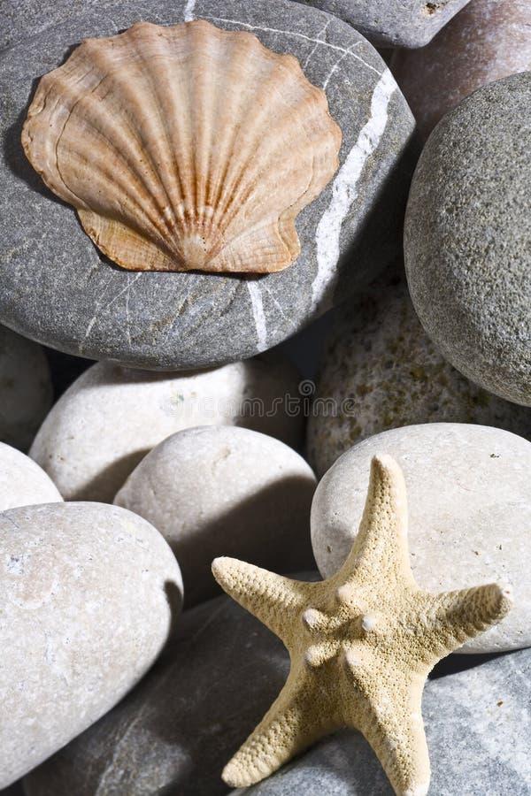 Download Marine background. stock image. Image of life, background - 14445895