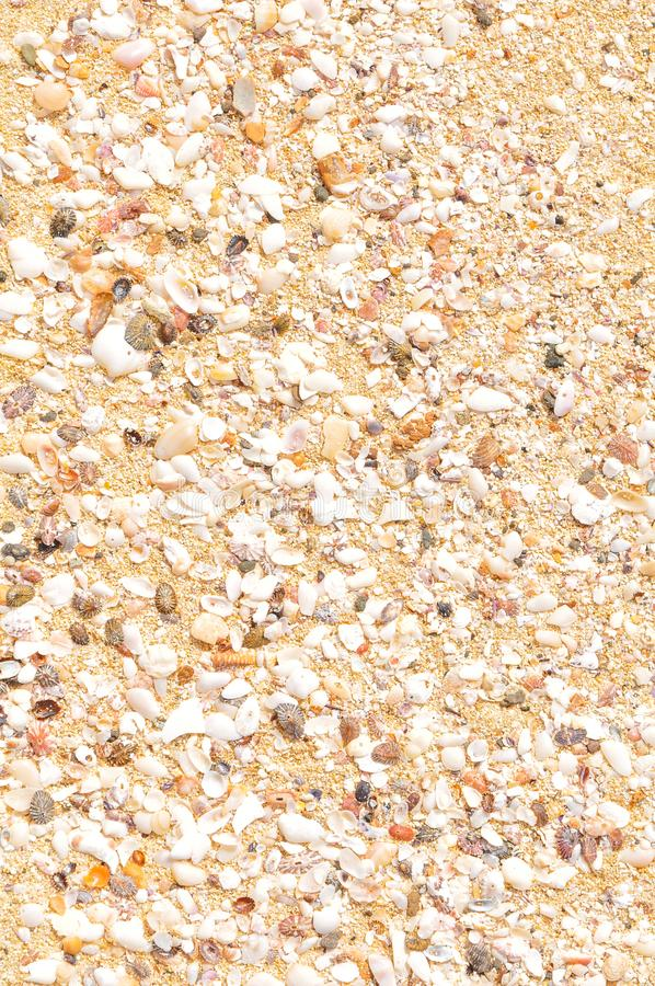 Marine background with sea shells royalty free stock photography