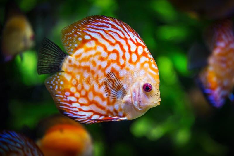 Marine Biology, Close Up, Organism, Fauna stock photo
