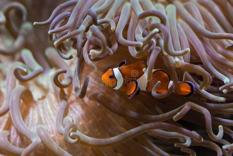 Marine Biology, Coral, Organism, Sea Anemone royalty free stock photography