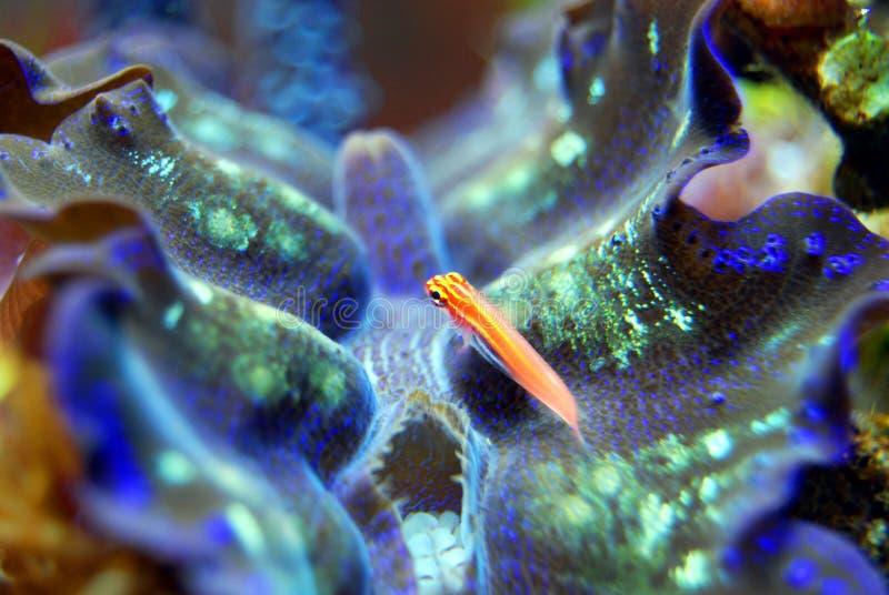 Marine Biology, Coral Reef, Coral, Organism stock images
